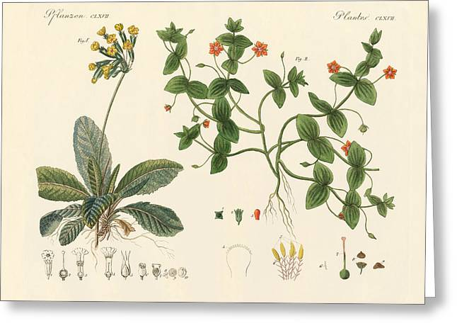 Medical Plants Greeting Card by Splendid Art Prints
