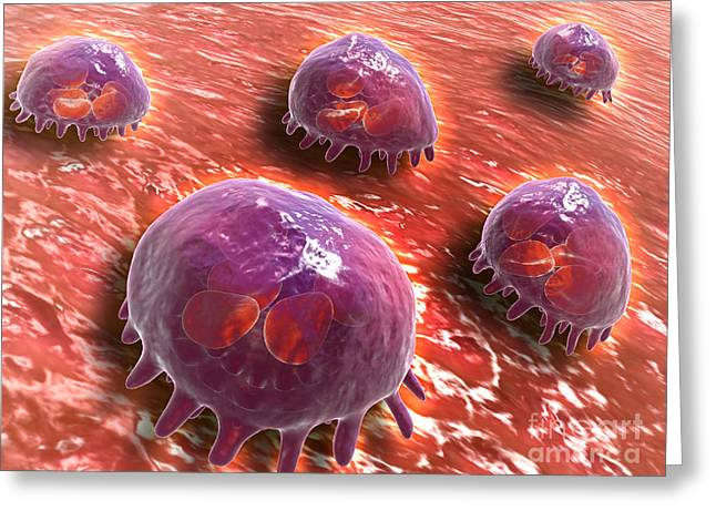 Microscopic View Of Phagocytic Greeting Card by Stocktrek Images