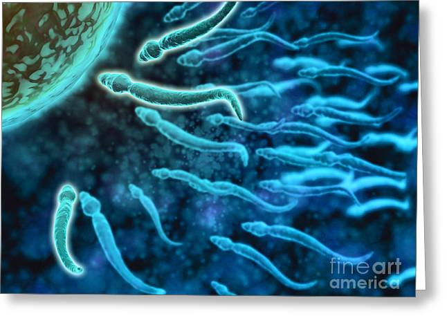 Microscopic View Of Sperm Swimming Greeting Card by Stocktrek Images