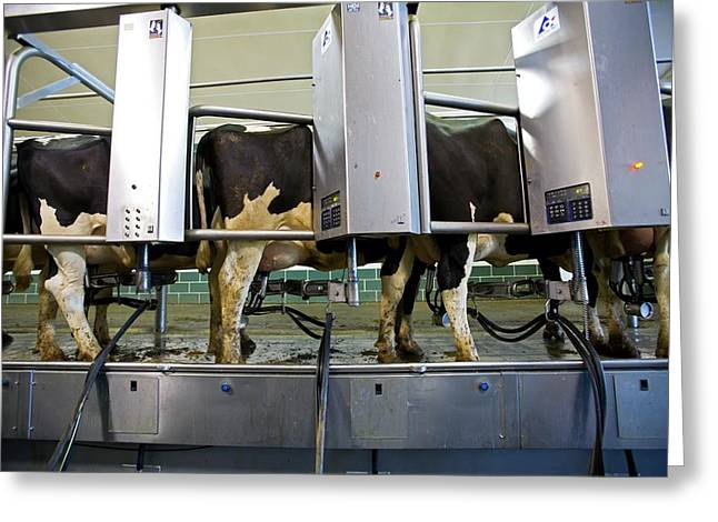 Milking Parlour Greeting Card by Jim West