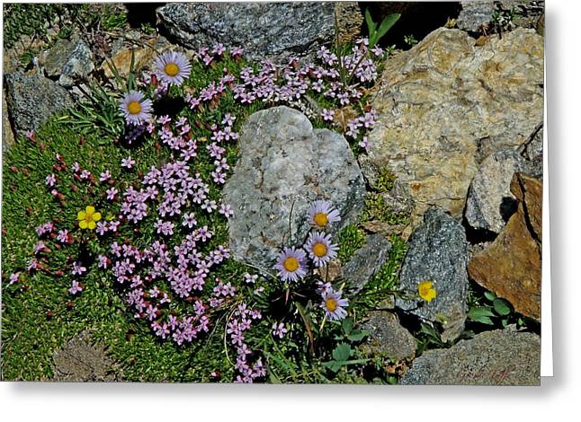 Miniature Rock Garden Greeting Card by George Tuffy