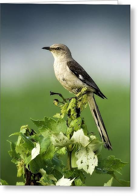 Mocking Bird Greeting Card