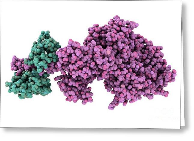 Molecular Motor Protein Greeting Card by Laguna Design