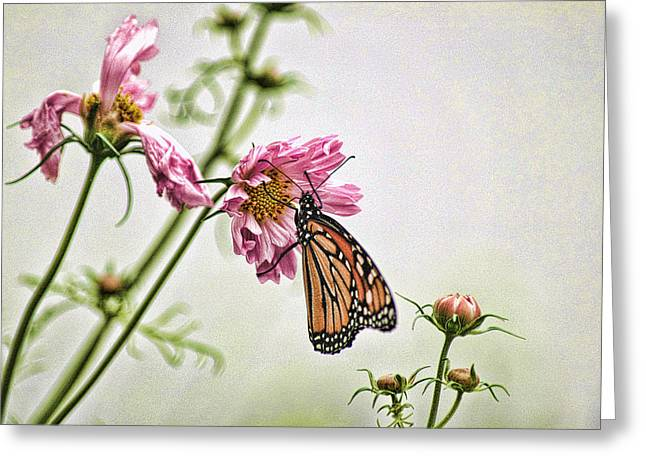 Greeting Card featuring the photograph Monarch by David Armstrong