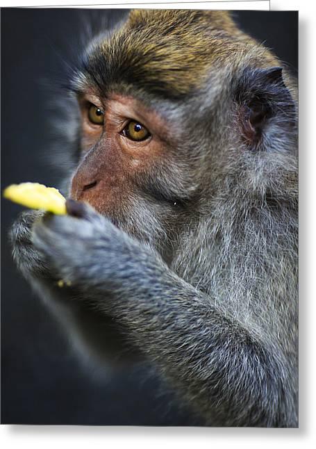 Monkey - Bali Greeting Card