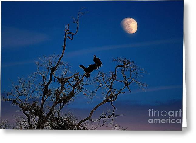 Moonrise Perch Greeting Card