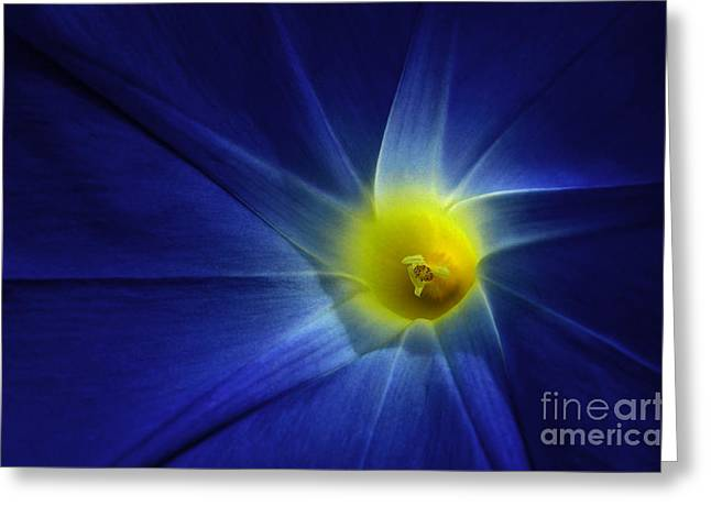 Morning Glory Macro Greeting Card by Mike Nellums