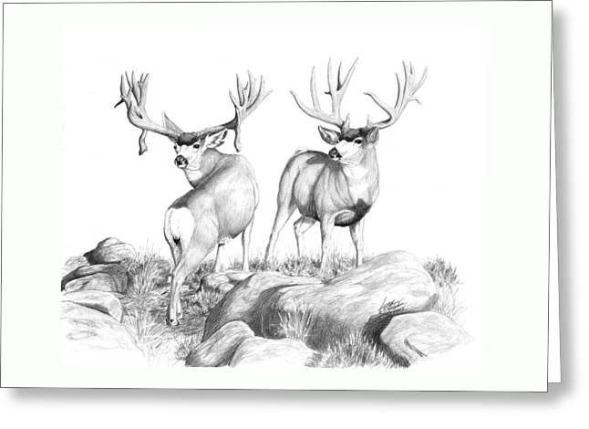 2 Muley Bucks Greeting Card