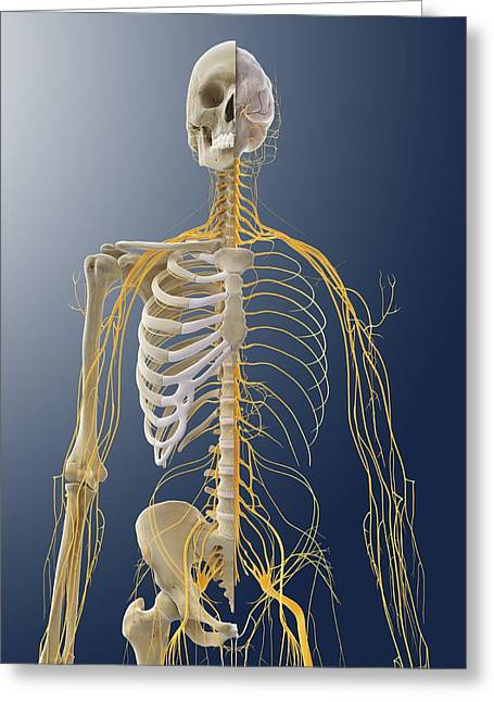 Nervous System, Artwork Greeting Card