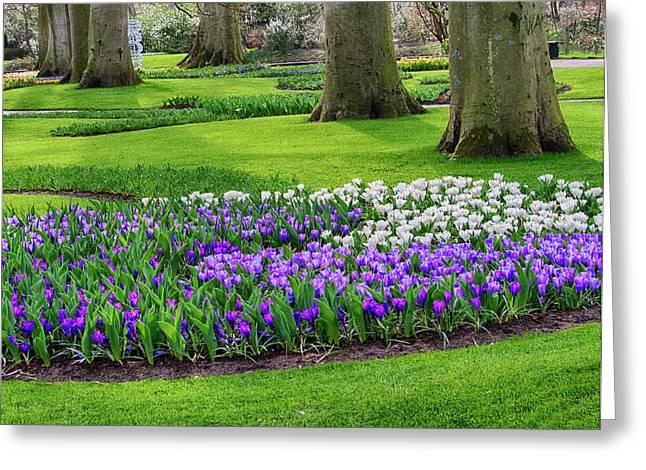 Netherlands, Flower Displays Greeting Card