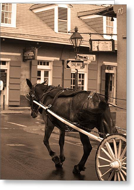 New Orleans - Bourbon Street Horse 3 Greeting Card by Frank Romeo