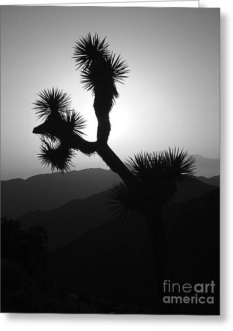 New Photographic Art Print For Sale Joshua Tree At Sunset Black And White Greeting Card by Toula Mavridou-Messer