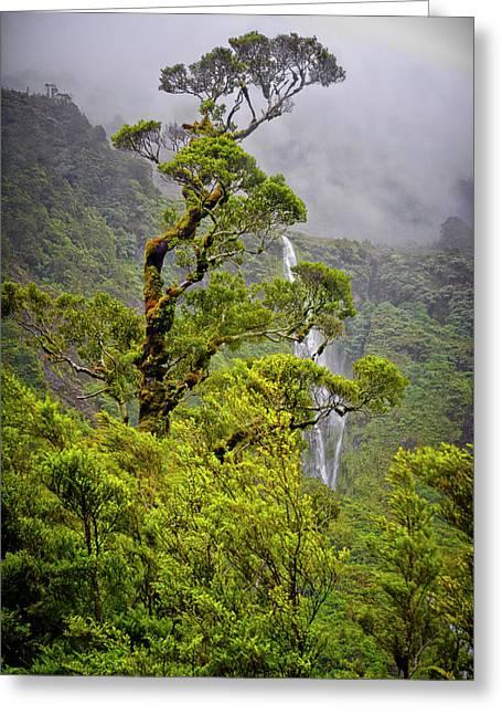 New Zealand, South Island, Fiordland Greeting Card by Rona Schwarz