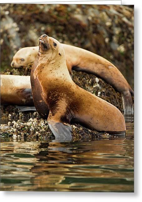 North America, Usa, Alaska, Sea Island Greeting Card by Joe and Mary Ann Mcdonald