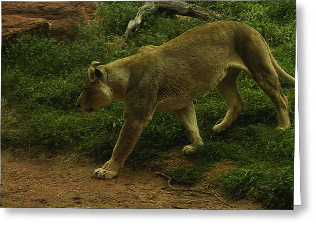 On The Prowl Greeting Card by Lindy Spencer