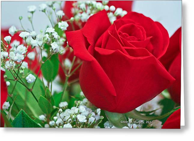 One Red Rose Greeting Card by Ann Murphy