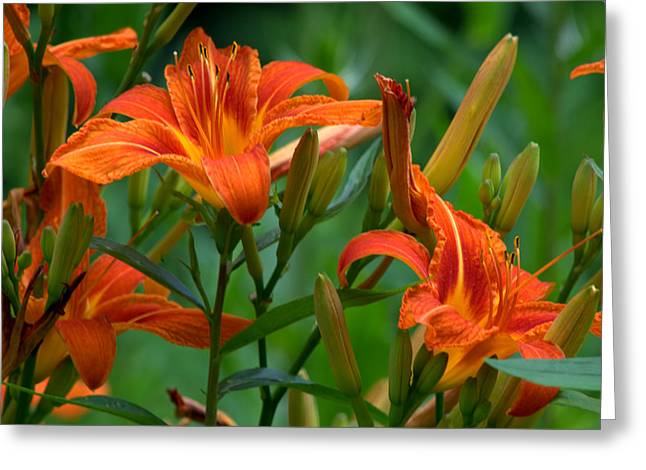 Greeting Card featuring the photograph Orange Lilly by Cathy Shiflett