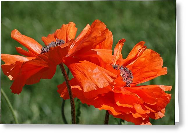 Orange Poppies Greeting Card by Rebecca Overton