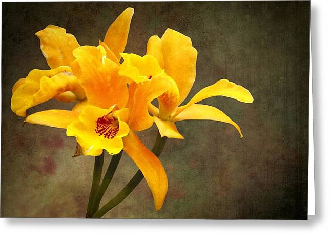 Orange Spotted Lip Cattleya Orchid Greeting Card