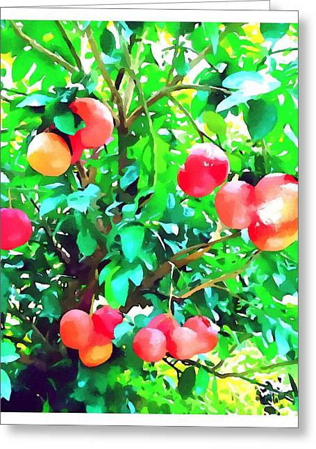 Orange Trees With Fruits On Plantation Greeting Card by Lanjee Chee