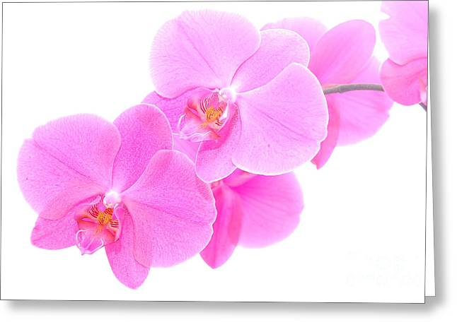 Orchid Isolated Greeting Card by Michal Bednarek