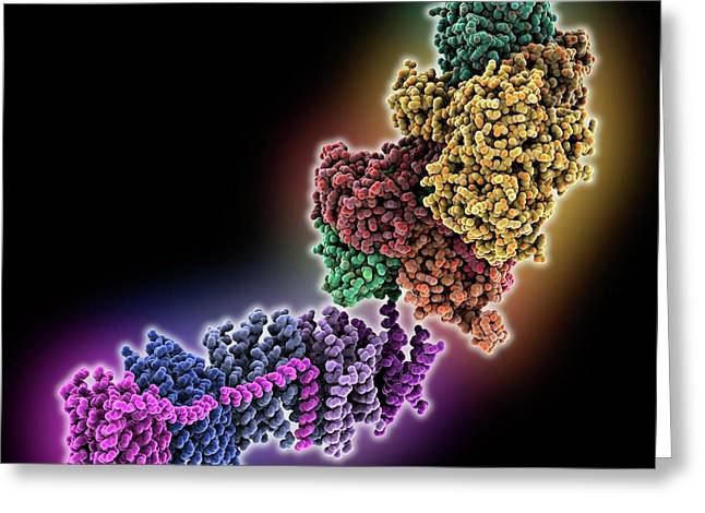 Oxidoreductase Enzyme Complex Greeting Card by Laguna Design
