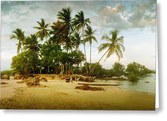 Palm Trees On The Beach In Morro De Sao Greeting Card