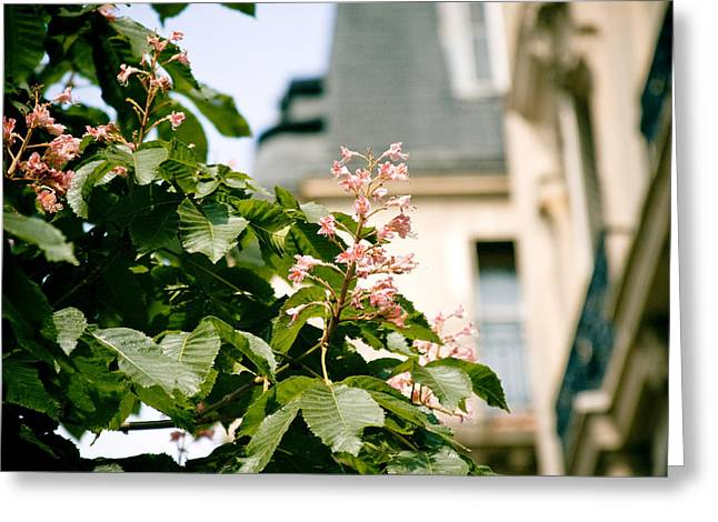Paris The City Of Blossoming Chestnut Trees  Greeting Card