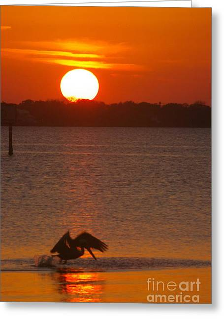 Greeting Card featuring the photograph Pelican Sunset by Tannis  Baldwin