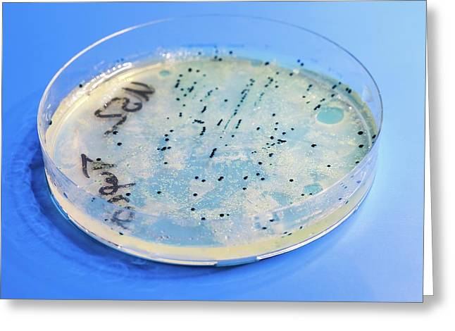 Petri Dish Greeting Card