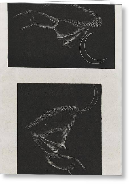 Phosphenes And Retinal Images Greeting Card by King's College London