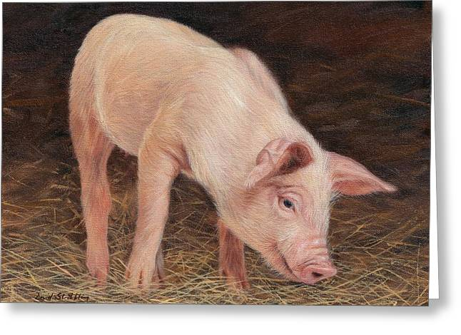 Pig Greeting Card by David Stribbling
