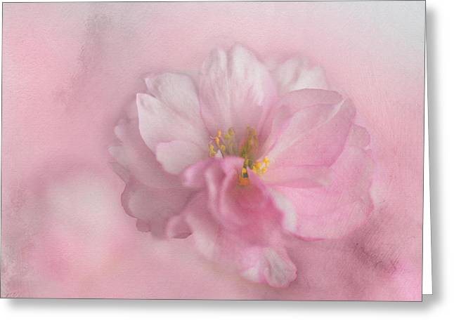Greeting Card featuring the photograph Pink Blossom by Annie Snel