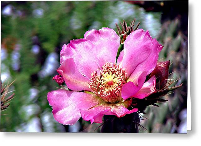 Pink Cactus Flower Greeting Card