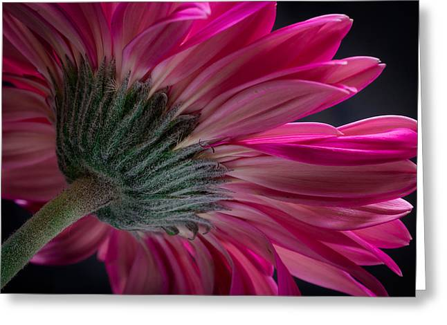 Greeting Card featuring the photograph Pink Flower by Edgar Laureano