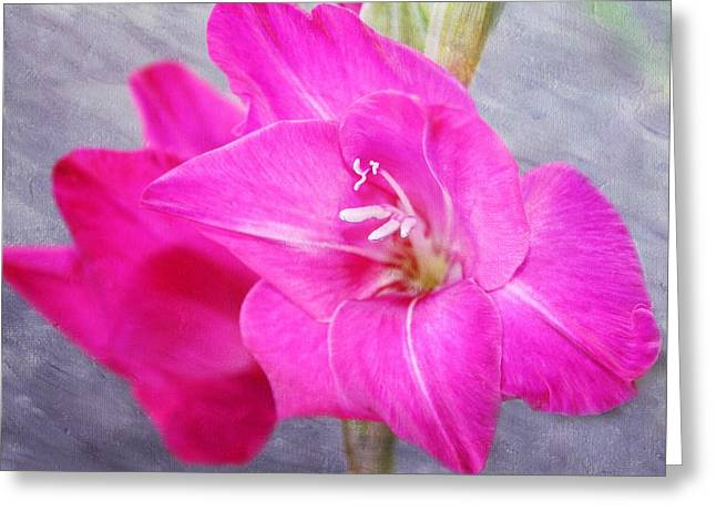Pink Gladiola Greeting Card by Cathie Tyler
