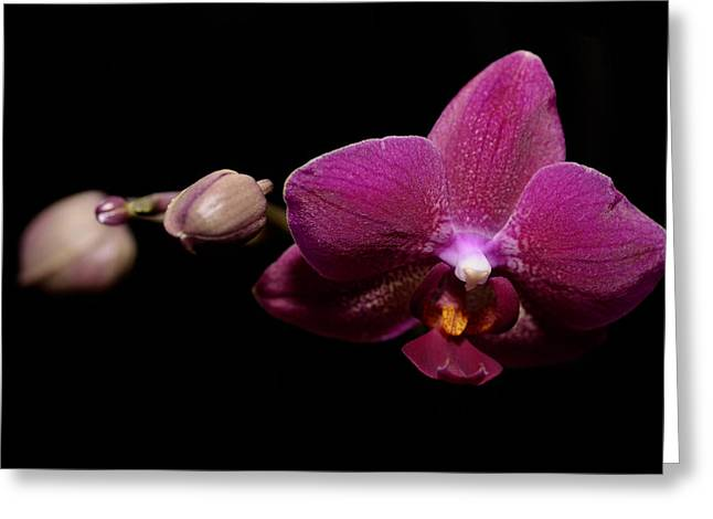 Pink Orchid Greeting Card by Tommytechno Sweden