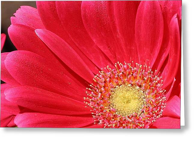 Pink Sensation Greeting Card by Bruce Bley