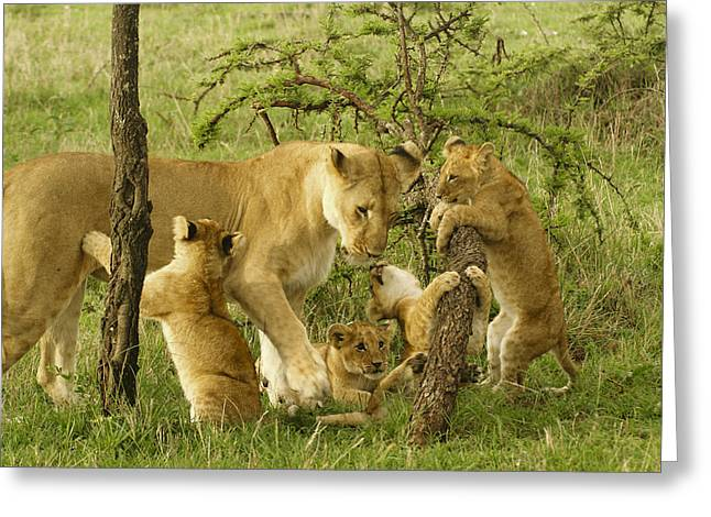 Playing With Mom Greeting Card