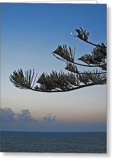 Pleasing Memory. Madeira. Greeting Card