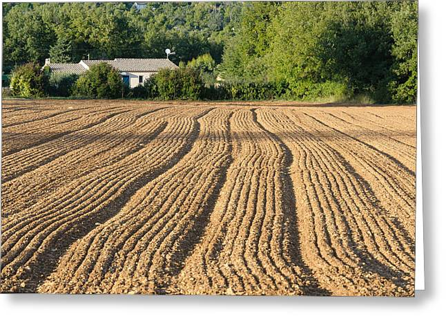 Plowed Field In Provence Greeting Card by Alain De Maximy