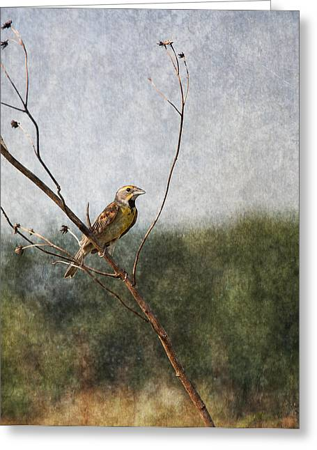 Poised Greeting Card by Dale Kincaid