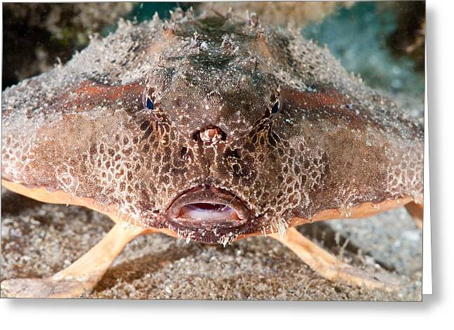 Polka Dot Batfish Greeting Card
