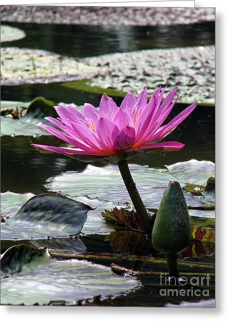 Pond Series Greeting Card