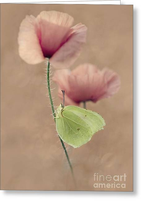 Poppies Greeting Card by Jaroslaw Blaminsky