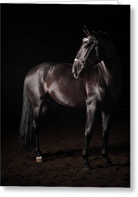 Portrait Of A Lusitano Stallion Greeting Card by Jak Wonderly