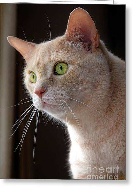 Portrait Orange Tabby Cat Greeting Card by Amy Cicconi