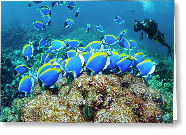 Powderblue Surgeonfish Greeting Card by Georgette Douwma