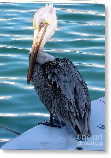 Precious Pelican Greeting Card by Claudette Bujold-Poirier