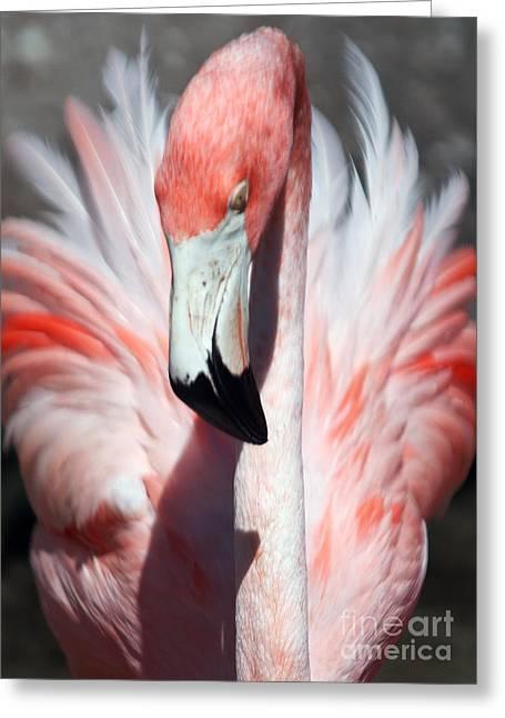 Pretty Flamingo Greeting Card by Sheryl Unwin